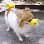 Botnita caine,rata (S-es)-botnita amuzanta pentru micul tau animal ,iti da siguranta si umor bun garantat